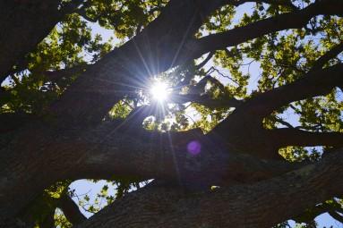 tree light- Kirstenbosch Botanical Gardens